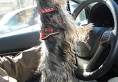 LoLa entrain de conduire
