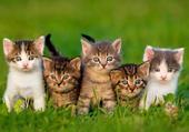 cinq chats