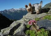 Jordy Vacances à la montagne