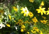Puzzle fleurs de mon jardin
