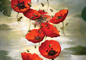 Coquelicots - Kevin Sloan