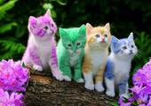 cats colors