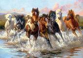 les chevaux dans l'eau