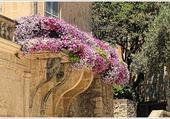 Terrasse fleurie sur la place