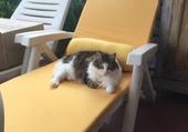Lisa sur son relax à faire bronzette !!