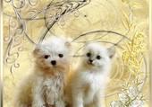 entre chien et chat que de l amitié