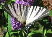 Joli Fleur de Papillons