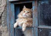 chat a la fenetre