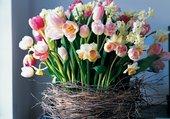 Composition florale printanière