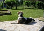 Charlot gardien de jardin