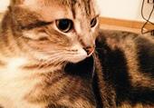 Mon chat Capsule