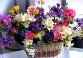 Superbe panier de fleurs