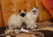 chatons frère et soeur