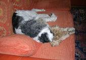 Charlot testeur de canapé