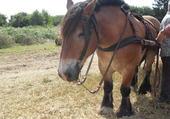 Mon un cheval....