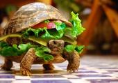 Turtel burger