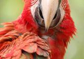 Puzzle puzzl perroquet