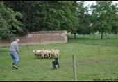 Driscoll au Moutons