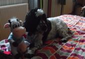 Benji et sa vache Marguerite