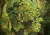 Portrait vegetal