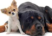 chiens amitié