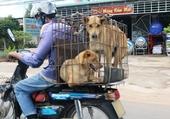 Transport Vietnamien.7
