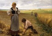 Liage des herbes
