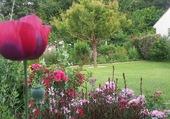 mon coin de jardin