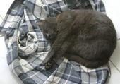 Léo endormi