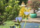 le jardin asiatique