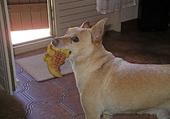 En souvenir de mon chien BILL
