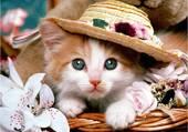 Chaton au chapeau