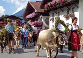 Almabtrieb in Lermoos (Tirol)