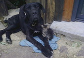 Sam et son copain le chat
