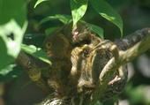 maman bebe zoo de mulhouse 68116