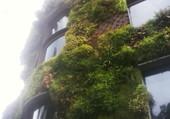 Puzzle Verdure urbaine
