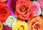 1001 roses