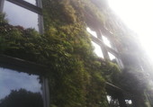 Puzzle Immeuble Végétal