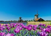 des fleurs et des moulins