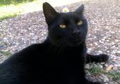 Le chat aux pâquerettes
