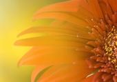 Puzzle Fleur ensoleillée