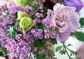 Lilas, superbe fleur du printemps
