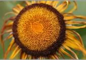 Puzzle Comme un soleil