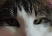 Puzzle les yeux du chat