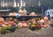 Puzzle Halloween à Pairi Daiza