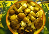 cèpes de dordogne