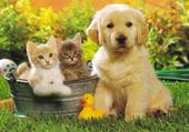 Puzzle chien et chat