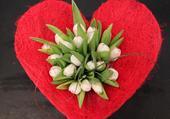 Tulipe dans un coeur