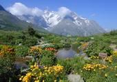 Puzzle Jardin alpin du Lautaret