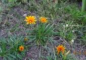 Puzzle Fleurs de rocailles